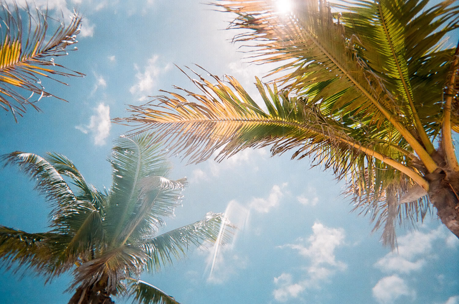 YOUR 4 WALLS: A Love Letter to Southwest Florida